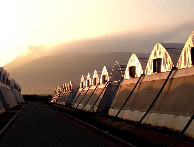 Hishtil SA Greenhouse Facility